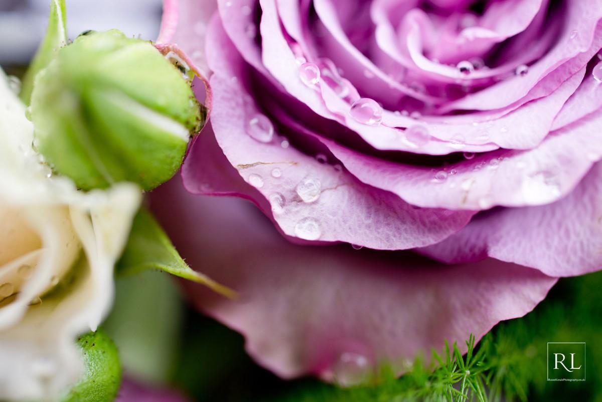 lilac rose detail