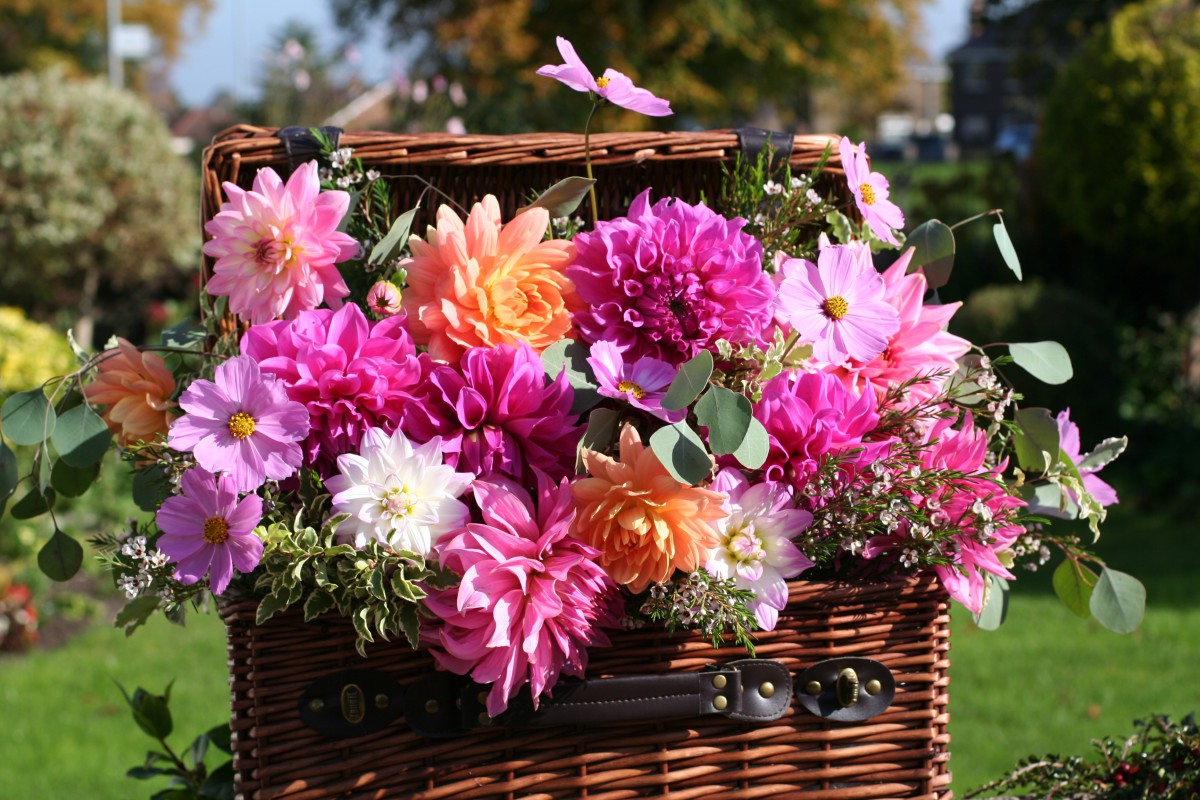 wicker hamper with bright dahlias