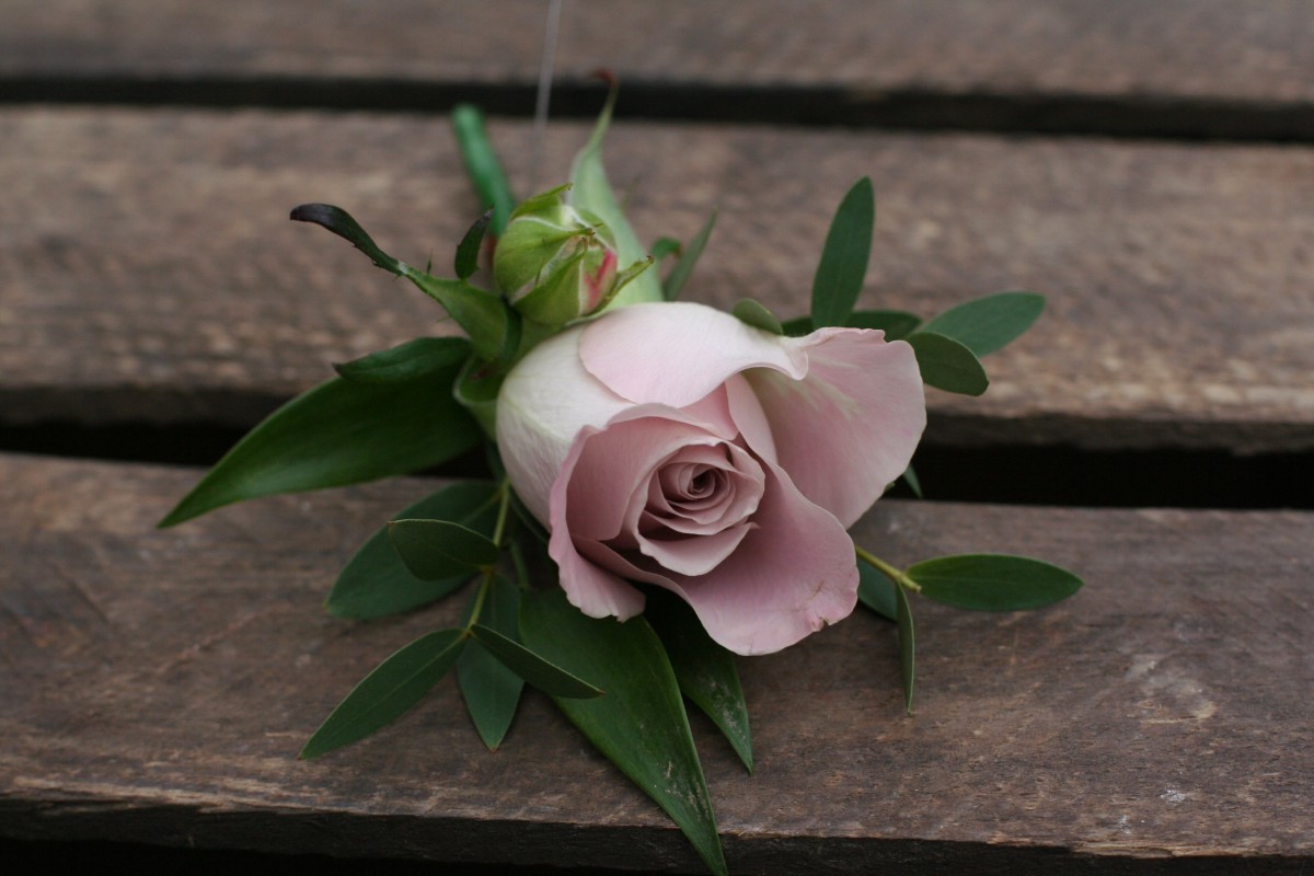 pink rose buttonhole