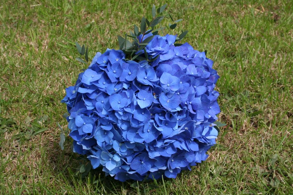 colbalt blue hydrangea brides bouquet
