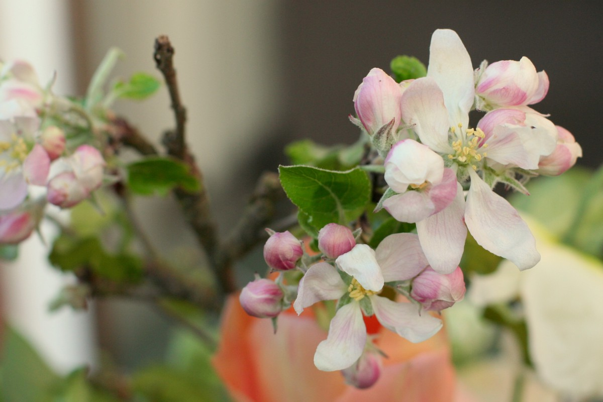 apple blossom spring wedding