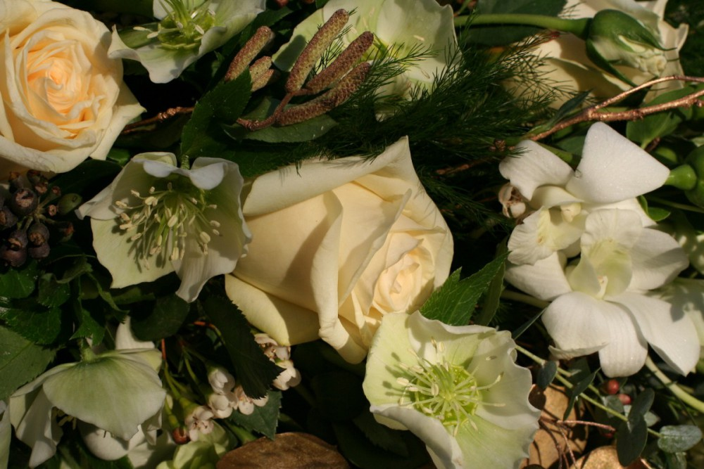winter hellebores and roses